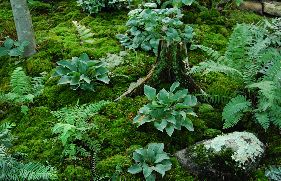 Moss Gardening Old Herbaceous