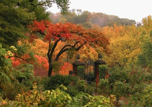 View from the Rose Garden in Autumn