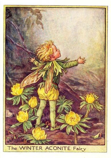 winter_aconite_flower_fairy