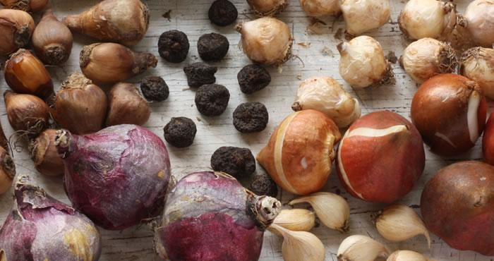 Assortment of dry flower bulbs.