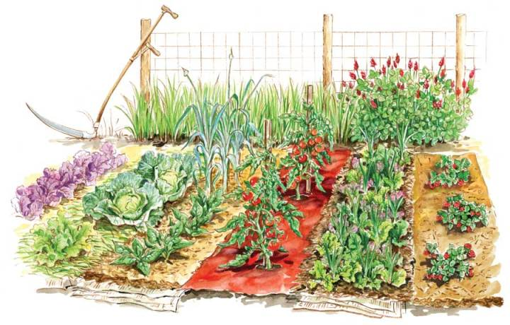 vegetable-garden-illustration